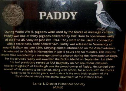 paddy-the-pigeon-3648191